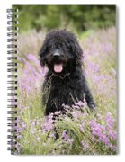 Black Labradoodle Spiral Notebook