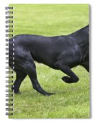 Black Labrador Playing Spiral Notebook