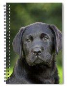Black Labrador Puppy Spiral Notebook
