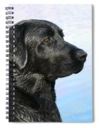 Black Labrador Retriever After The Swim Spiral Notebook
