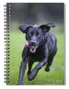 Black Labrador Running Spiral Notebook