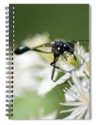 Black Mud Dauber Spiral Notebook