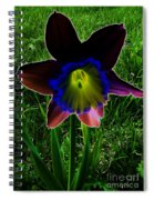 Black Narcissus Spiral Notebook