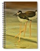 Black-neck Stilt Spiral Notebook