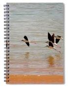 Black-necked Stilt - Lake Powell Spiral Notebook