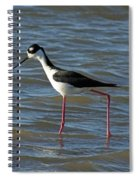 Black Necked Stilt Spiral Notebook