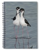 Black-necked Stilts Spiral Notebook
