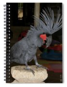 Black Palm Cockatoo Spiral Notebook