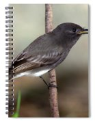 Black Phoebe Spiral Notebook