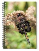 Black Saddlebags Dragonfly At Rest Spiral Notebook
