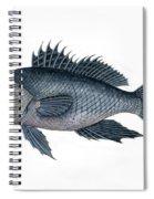 Black Sea Bass 3 Spiral Notebook