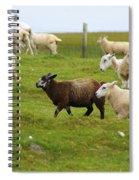 Black Sheep Spiral Notebook