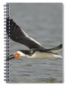 Black Skimmer Eating Fish Spiral Notebook