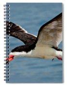 Black Skimmer In Flight Spiral Notebook