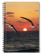 Black Skimmers At Sunset Spiral Notebook