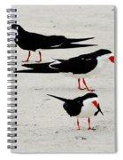 Black Skimmers  Spiral Notebook