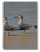 Black Skimmers On The Beach Spiral Notebook