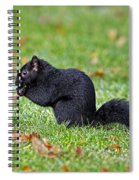 Black Squirrel Spiral Notebook