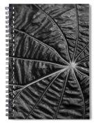 Black Star.. Spiral Notebook
