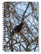 Black  Starling Spiral Notebook