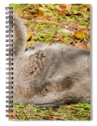 Black Swan Cygnet Spiral Notebook
