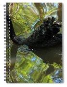 Black Swan Series V  Spiral Notebook