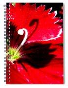 Black Swan Shadow Spiral Notebook