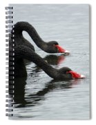 Black Swans Australia Spiral Notebook