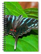 Black Swordtail Butterfly Spiral Notebook