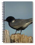 Black Tern Spiral Notebook