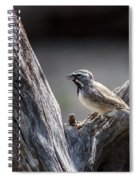 Black Throated Sparrow Spiral Notebook