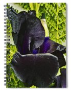 Blackbeard Spiral Notebook