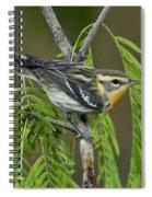 Blackburnian Warbler Spiral Notebook