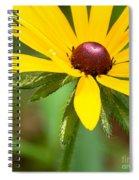 Blackeyed Susan Spiral Notebook