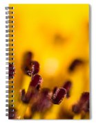 Blackweyed Susan Stamens Spiral Notebook