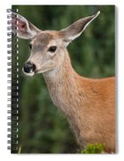 Blacktail Doe Looking At The Camera Spiral Notebook