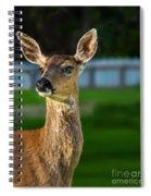 Blacktail Portrait Spiral Notebook