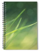 Blades Of Grass Bathing In The Sun Spiral Notebook