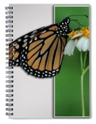 Blank Greeting Card 5 Spiral Notebook