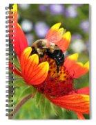 Blanket Flower And Bumblebee Spiral Notebook