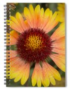 Blanket Flower Spiral Notebook