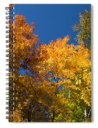 Blazing Autumn Colors - Just Lift Your Head Spiral Notebook
