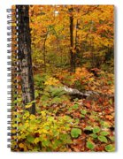Blazing Forest Spiral Notebook