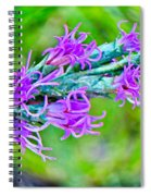 Blazing Star Spiral Notebook