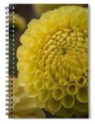 Blazing Yellow Dahlia Spiral Notebook
