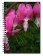 Bleeding Heart  Spiral Notebook
