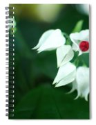 Bleeding Heart Vine Blossom Spiral Notebook