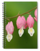 Bleeding Hearts Spiral Notebook