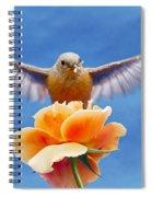 Bless  You Spiral Notebook