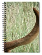 Bloodhound Tail Spiral Notebook